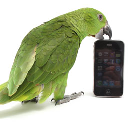 parrot-phone